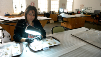Ann Ross sitting at inspection table looking at a bone through a magnification light